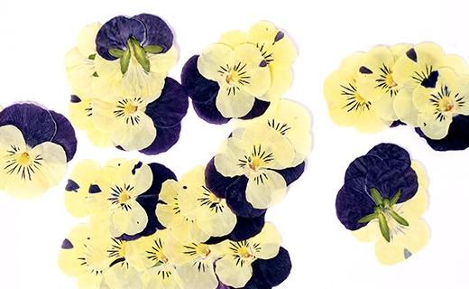 Essbare getrocknete Blüten, japanisch - Neworks